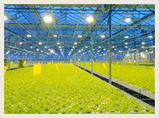 buy-fabric-pots-customers (4)